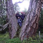Die Urlärchen in Ladurns / Larici antichissime a Ladurns