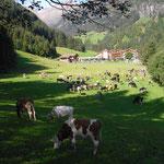 Almabtrieb / le mucche vengono dall' alpeggio