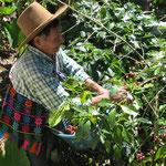 Koffieboer Fair Trade