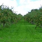 Apfelbaum - Erlebnis