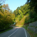 Kurven-Wald-Erlebnis