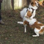 Der große Bruder Bouncer spilet mit seinem kleinen Bruder Chazz