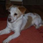 Colin von der Grinauer Eiche 1,5 Jahre alt
