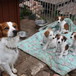 Attilla mit 4 seiner Kinder