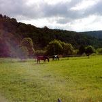 Pavo und Cheyenne auf der Weide