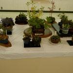 砂川ハルエ:庭の植物