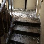 Dépigeonnage et désinfection de cage d'escaliers