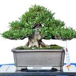 (카누마시의회의장상)   백림의광     수상자 : 스다 타케사부로     주소 : 사이타마현 쿠마가야시