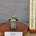 일본만년청협회회장상     부국전     수상자 : 가토 타케오
