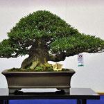 (농림수산대신상) 광림    수상자:이수에 카즈오    주소 : 치바현 다테야마시