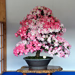 농림수산대신 상. 품종 : 화련광(花蓮光). 수상자 : 니시자와 미사코. 주소 : 도쿄 하치오지시