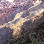...am Anfang war der Baum (Foto: VDM)