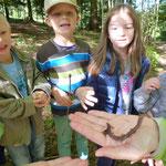 Wie leben Regenwürmer und warum sind sie für den Waldboden wichtig!