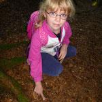 Fichtenzapfen liegen am Boden, Tannenzapfen bleiben in den Baumwipfel und fallen nicht zu Boden.