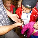 Ein Salamander wird entdeckt!