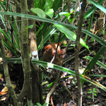 Les tarsiers de Bohol