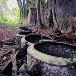 Ruines usine sucrière Mayotte