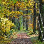 Forêt de Grimbosq (14)