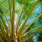 Jardin de Coconi