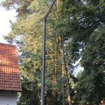 Fällung von 5 Nadelbäumen auf engstem Raum