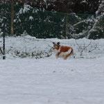 雪が積もりました!2013 1月
