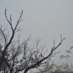 濃 霧 2 /13.12.02