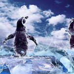 Image credit: <a href='http://fr.123rf.com/photo_15495783_penguin-on-the-ice-in-water-drops.html'>yuran-78 / 123RF Banque d'images</a>