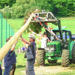Aufstellen des Baumes