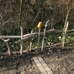 Treibholzzaun im Gemüse-/Kräutergarten