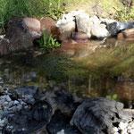 Teich mit Froschlaich