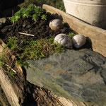 Treibholzfundstück mit Hauswurz bepflanzt