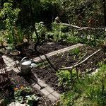 Hinten rechts kommen schon die Schalotten raus. Davor ein paar Kartoffeln (Linda). Vorne wachsen ein paar Möhren, rechts davon Kohlrabi und wieder rechts die Rote Beete.