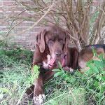 Chocci - Zuhause in den Niederlanden gefunden