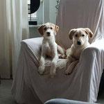 Finn und Ivory - Zuhause gefunden