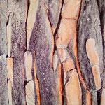 Pinus Pinea (100x100 cm, Acryl Mischtechnik)