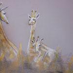 61 - Conversation entre girafes - pastels 2015 - VENDU - encadré dimensions 61x81