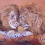 95 - Câlins entre rois de la jungle - pastels 2016 - VENDU - encadré 66x51