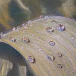 57 - Perles de rosée - pastels 2015 VENDU