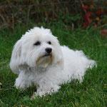 Julia unser Gasthund.., aber pssst nicht durch das süße Äußere täuschen lassen ;-)