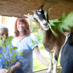 Wir haben Ziegen, Katzen, Hunde und Vögel im Heidehaus. Es gibt immer was zu tun.