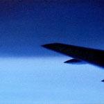 翼(31.8×41.0cm)