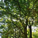 Der Schatten der Bäume bringt Kühle
