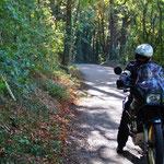 Mitten durch einen kleinen Wald