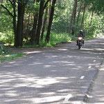 Eine kleine bewaldete Landstraße