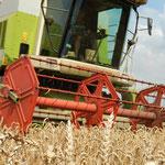 In der Landwirtschaft zu arbeiten bedeutet, mit und in der Natur zu arbeiten. Geregelte Arbeitszeiten haben hier Seltenheitswert.