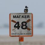 Bunchee Beach; Kingfisher; Nikon D500 + AF-S 200-400