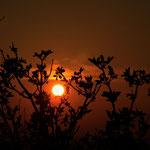""""""" Der Sonnenbaum """" ... noch 40 Minuten bleiben Zeit, um hier und da ein Bäumchen in`s rechte Licht zu rücken ..."""