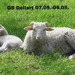 GS Dollart 07.05.-09.05.  Foto: Lea Overmann