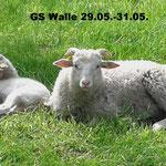 GS Walle 29.05.-31.05.  Foto: Lea Overmann