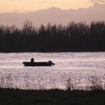 Der Rheinfischer